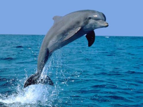 lumba-lumba