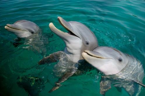 lindungi lumba-lumba